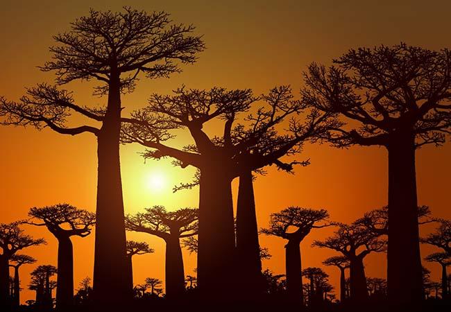 Terra di Mezzo Viaggi - Destinazione - Madagascar