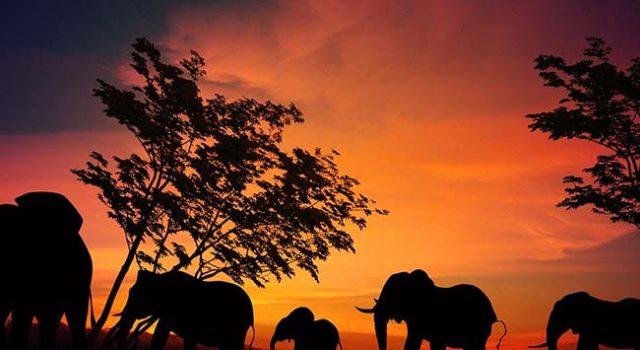 Terra di Mezzo Viaggi - Destinazione - Tanzania e Zanzibar