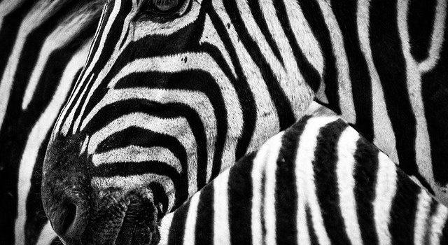 Terra di Mezzo Viaggi - Destinazione - Kenya