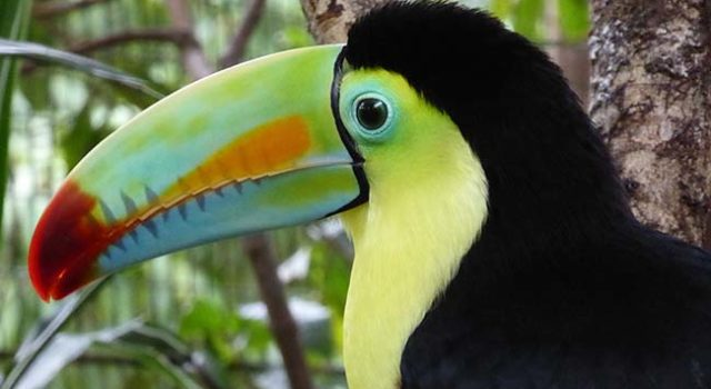 Terra di Mezzo Viaggi - Destinazione - Costa Rica