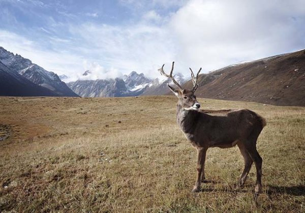Terra di Mezzo Viaggi - Destinazione - Alaska